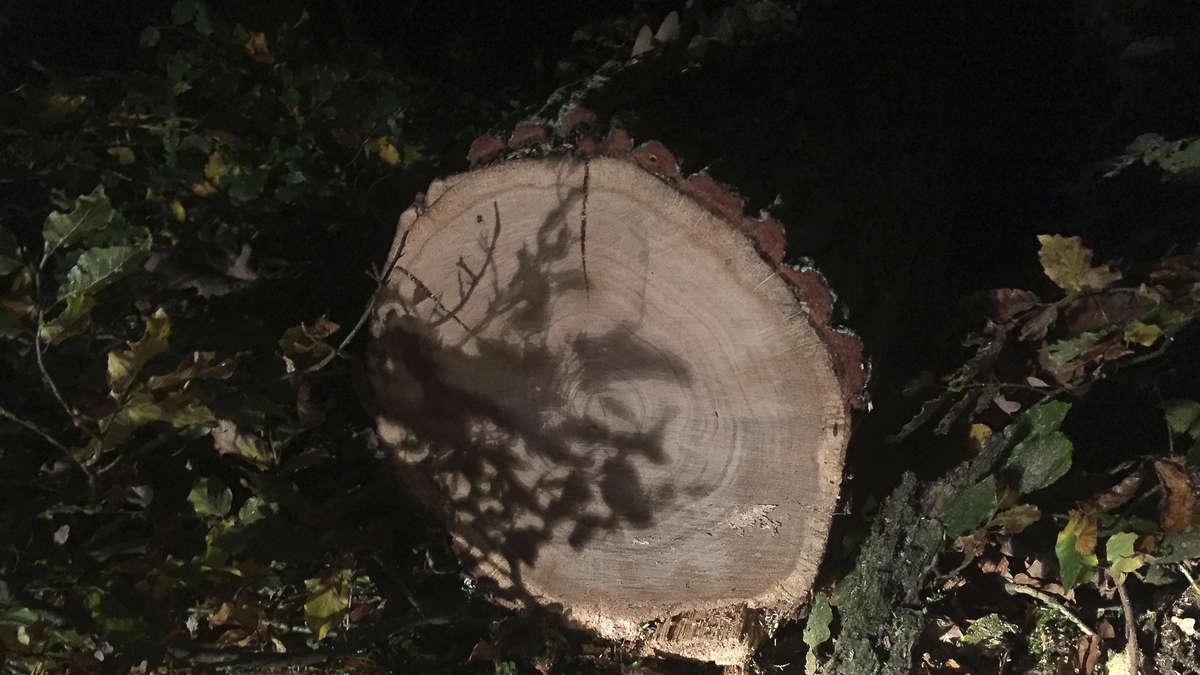 eichenholz bei stormburch aus dem wald gestohlen diemelsee. Black Bedroom Furniture Sets. Home Design Ideas
