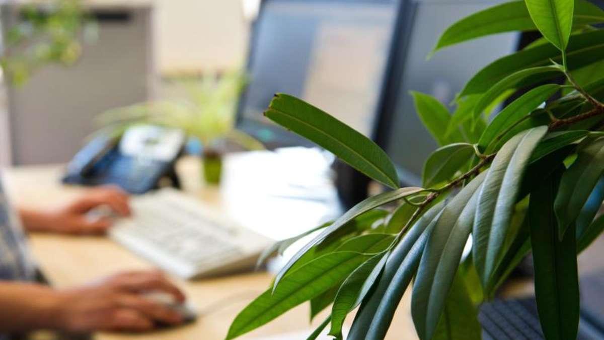 worauf im b ro mit pflanzen zu achten ist karriere. Black Bedroom Furniture Sets. Home Design Ideas